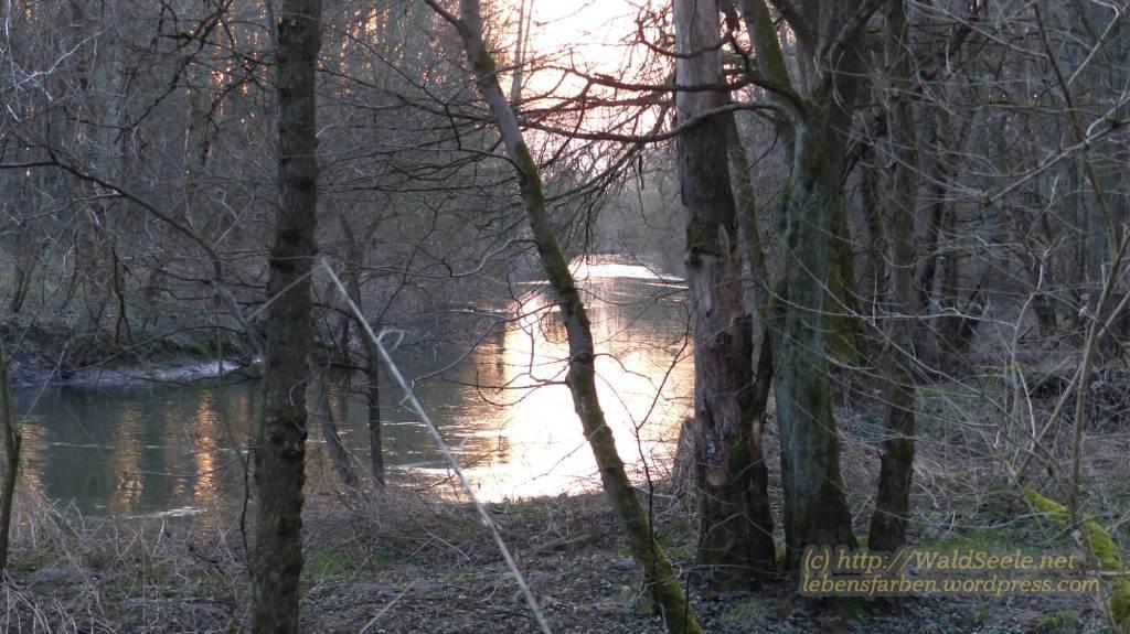 P1050168_Kinzig gen Sonnenuntergang_wz_87kb