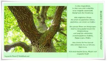 Kühnheit_Goethe