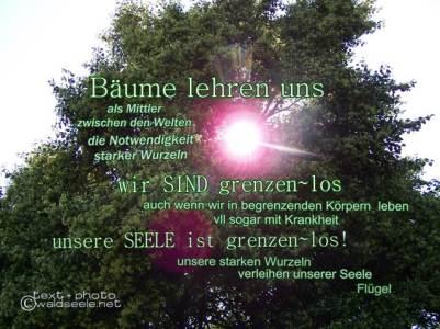 Wurzeln+Flügel_Licht
