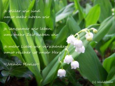je stiller_mariss_komp