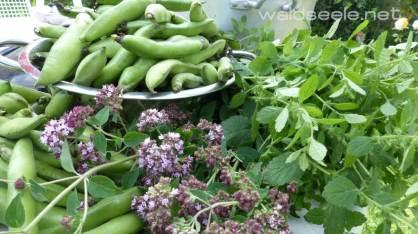 Bohnen, Oregano, Zitronenmelisse