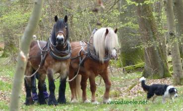 Rückerpferde im Wald