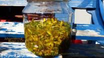 Johanniskraut-Blüten in Öl heilkräftig