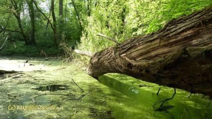auch gefallene Bäume leben