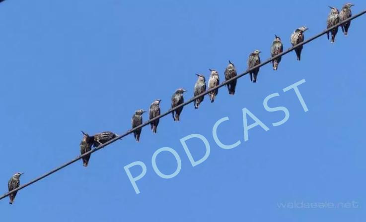 """was hat """"Aussteigen aus der Zeitlinie"""" mit Frieden zu tun? Finde das was Dich von INNEN hält! –podcast"""