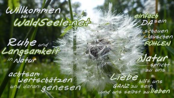 Pusteblume_willkommen_wz_87