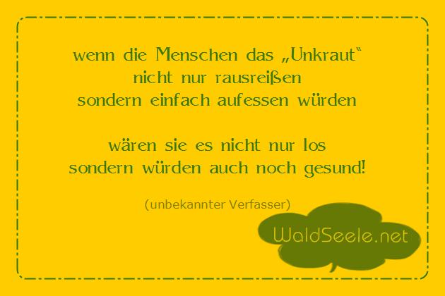 leckere Löwenzahn~Blüten! mmh..:)
