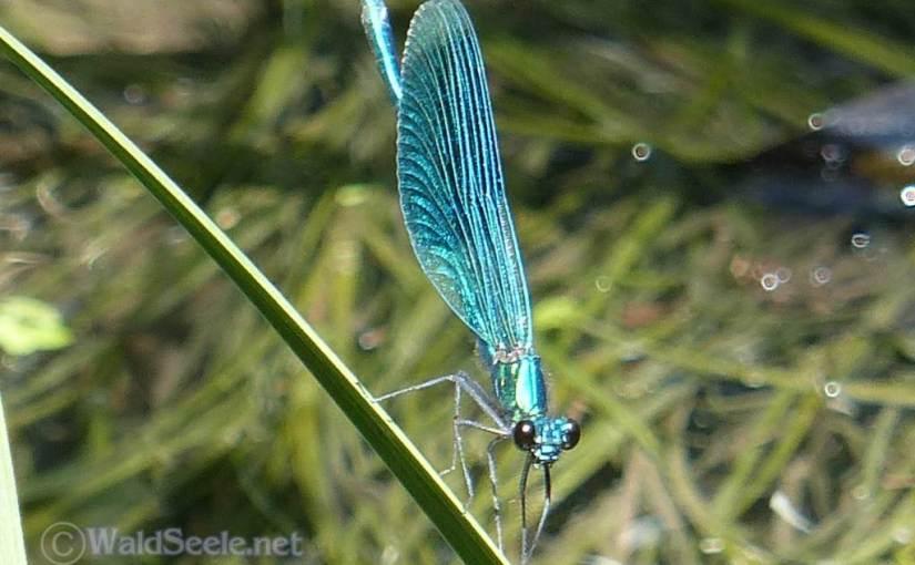 Libellenreigen